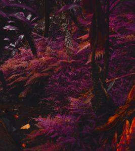Transforest nieuwe escape room van PLONG